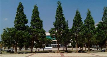 通渭县义岗中学