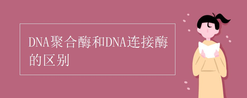 生物知识点:DNA聚合酶和DNA连接酶的区别