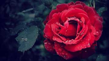 武汉市石牌岭高级职业中学学费是多少及各专业收费标准