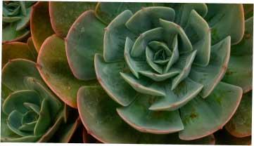 2017鞍山市51中学八年级月考地理试题【图片版无答案】