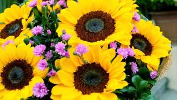 2017年青岛市中考物理试题word版(含答案)