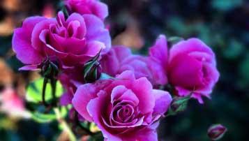2018年河北省中考政治试卷真题【word版 可下载】
