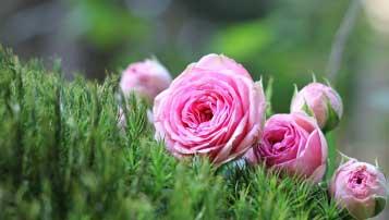 2018年天津中考物理模拟试卷【精选word版 可下载】