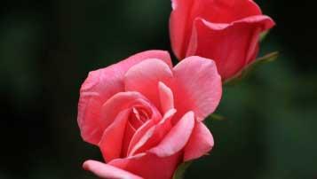 2018年太原第二外国语学校全国排名第152名 山西省排名第5名