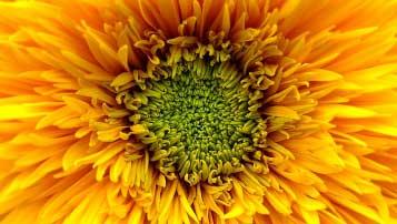 2017年漳州市中考作文题目预测:离别的歌