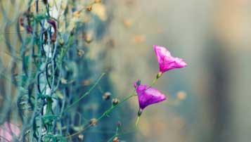 2018年郴州中考数学模拟试题word版(含解析)